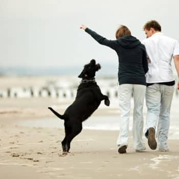 estate plan, pet trusts, dog on beach