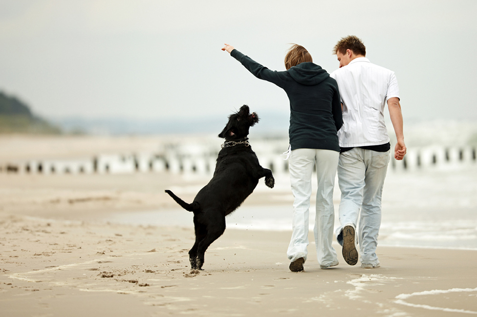 estate plan, pet trusts, dog on beach